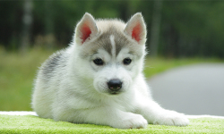 Cute Pups screenshot 6/6