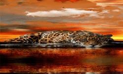 Leopard Cloud Live Wallpaper screenshot 2/3