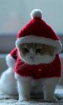 Santa Claus Cat Live Wallpaper screenshot 1/3