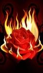 Rose Flaming Live Wallpaper screenshot 1/6
