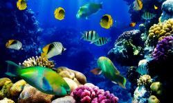 Aquarium wallpaper hd screenshot 1/6