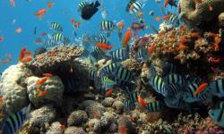 Aquarium wallpaper hd screenshot 2/6