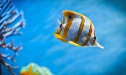 Aquarium wallpaper hd screenshot 3/6
