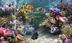 Aquarium wallpaper hd screenshot 4/6