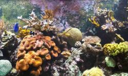 Aquarium wallpaper hd screenshot 5/6