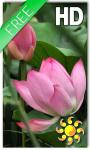 Lotus Live Wallpaper HD screenshot 1/2