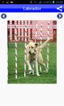 Dog Breeds Pictures And Photos screenshot 2/5