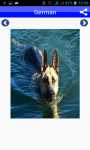 Dog Breeds Pictures And Photos screenshot 3/5