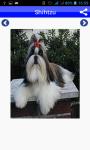 Dog Breeds Pictures And Photos screenshot 4/5