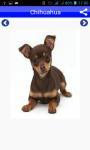 Dog Breeds Pictures And Photos screenshot 5/5