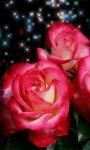 Beautiful Roses Live Wallpaper screenshot 2/3