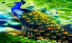 Peacock feather LWP screenshot 2/3