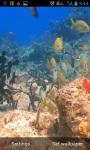 Colorful Fish screenshot 1/3