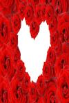 Valentines Day Flowers screenshot 2/4