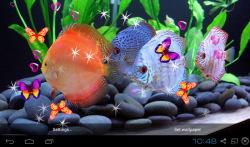 3D Discus Aquarium Live Wallpapers screenshot 4/4