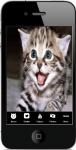 Cats For Beginners screenshot 1/4