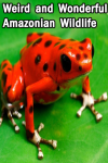 Weird and Wonderful Amazonian Wildlife screenshot 1/3