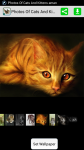 Photos Of Cats And Kittens screenshot 1/4