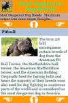 Most Dangerous Dog Breeds screenshot 3/3