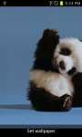 Cute Wave Panda Wallpaper screenshot 1/2