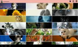 Best Cat Images screenshot 1/4