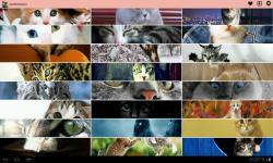 Best Cat Images screenshot 2/4