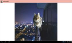 Best Cat Images screenshot 4/4