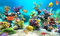 Aquarium HD NEW Live Wallpaper screenshot 5/5