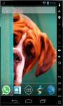 Cute Boxer Puppy LWP screenshot 1/2