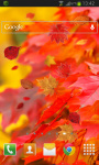 Autumn Leaves HD Free screenshot 2/2