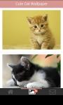 Cute Cat Wallpapers HD screenshot 1/6