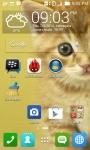 Cute Cat Wallpapers HD screenshot 4/6