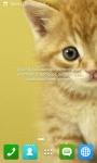 Cute Cat Wallpapers HD screenshot 6/6