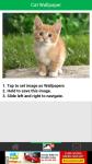 Cats Wallpaper screenshot 3/6