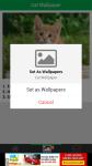 Cats Wallpaper screenshot 4/6