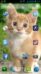 Cats Wallpaper screenshot 6/6