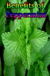 Benefits of Peppermint screenshot 1/3