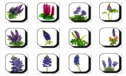 Bluebonnet Flowers Onet Classic Game screenshot 3/3