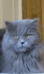 Blue Hair Kitty LWP screenshot 3/3