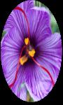 Benefits of Saffron screenshot 1/3