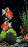 Orange Fishes Live Wallpaper screenshot 2/3