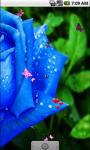 Blue Roses Live Wallpaper screenshot 3/4