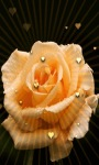 Yellow Heart Rose LWP screenshot 1/3