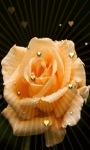 Yellow Heart Rose LWP screenshot 3/3