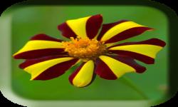 Flower photo frame pics screenshot 1/4