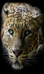 Quite Leopard Live Wallpaper screenshot 2/3