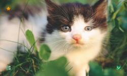 CAT WALLPAPERS HD screenshot 1/6