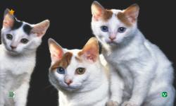 CAT WALLPAPERS HD screenshot 3/6