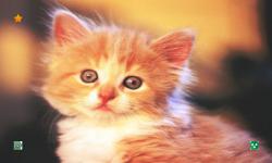 CAT WALLPAPERS HD screenshot 4/6