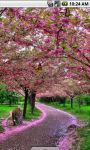 Sakura Flowers Scenery Live Wallpaper screenshot 1/4